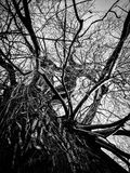Undershot of tree trunk branches. Undershot of tree trunk and branches Stock Image