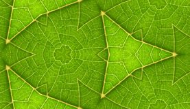 Underside Of Green Leaf Seamless Tile Background Royalty Free Stock Image
