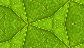 Underside Of Green Leaf Seamless Tile Background Royalty Free Stock Images