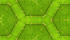 Underside Of Green Leaf Seamless Tile Background Stock Image