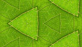 Underside Of Green Leaf Seamless Tile Background Stock Photography