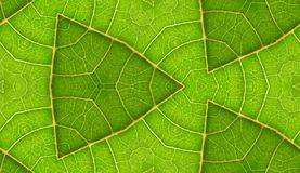 Underside Of Green Leaf Seamless Tile Background. A seamless pattern background texture of the underside of a green leaf Royalty Free Stock Photography