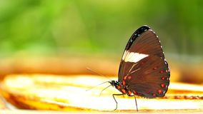 Underside of iridescent blue butterfly Royalty Free Stock Image