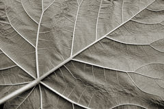 Underside of a leaf Royalty Free Stock Photography