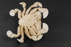 Underside of a moon crab Stock Image