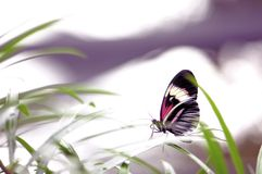 Underside of piano key butterfly on leaf in aviary Stock Images