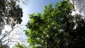 Underside view of trees and vegetation on mountain reserve forest. Low angle. rotating shot. Underside view of trees and vegetation on mountain reserve forest stock footage