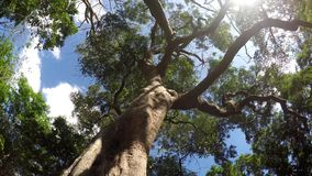 Underside view of trees and vegetation on mountain reserve forest. Low angle. rotating shot. Underside view of trees and vegetation on mountain reserve forest stock video