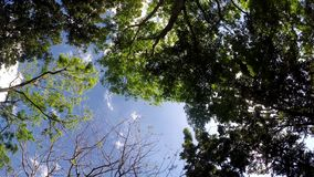 Underside view of trees and vegetation on mountain reserve forest. Low angle. rotating shot. Underside view of trees and vegetation on mountain reserve forest stock video footage