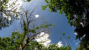 Underside view of trees and vegetation on mountain reserve forest. Low angle. Tracking shot stock video