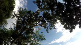 Underside view of trees and vegetation on mountain reserve forest. Low angle. Tracking shot stock video footage