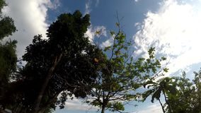 Underside view of trees and vegetation on mountain reserve forest. Low angle. Tracking shot stock footage