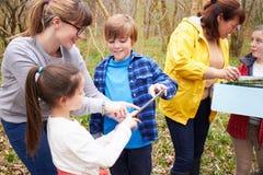 Undersökande trän för grupp på mitten för utomhus- aktivitet Arkivfoton