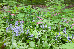Understory Plants. Shade loving plants growing under the canopy of trees Stock Photos