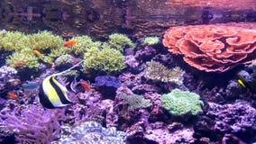 Undervattens- ängel Arkivbilder