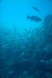 undervattens- Royaltyfri Bild