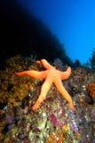 Undervattens- Arkivbilder