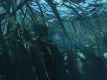 undervattens- Royaltyfria Bilder