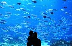 Undervattens- akvarium royaltyfria bilder