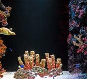 Undervattens- akvariumplats med Coral Reef och havsfisken Royaltyfri Bild