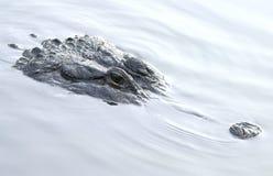undervattens- alligator fotografering för bildbyråer
