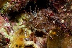 undervattens- anemon Royaltyfria Bilder