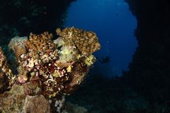 Undervattens- båge - rött hav Royaltyfria Foton