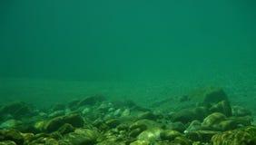 undervattens- bakgrund Royaltyfria Bilder