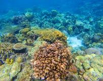 Undervattens- bakgrund för korallrev Olika korallformer Korallfisk i rev Royaltyfria Bilder
