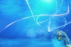 Undervattens- bakgrund med delfinen Royaltyfria Bilder