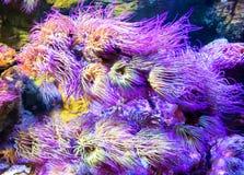Undervattens- bild av färgrika tropiska växter Arkivbilder
