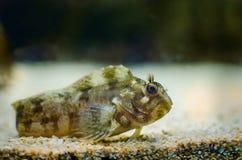 Undervattens- bild av korallreven och tropiska fiskar Royaltyfri Fotografi