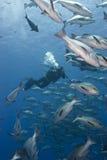undervattens- cameramanfilmande Fotografering för Bildbyråer