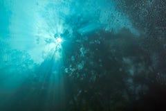 Undervattens- Cenote Arkivfoton