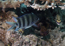 undervattens- closeupfisk Arkivfoton