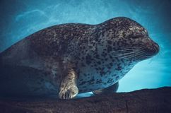 Undervattens- djur Arkivbild