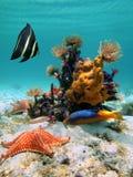Undervattens- färger och datalistor Arkivbild