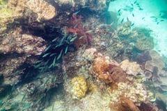 Undervattens- färgrik folkmassa för fisk för korallrev Royaltyfri Foto