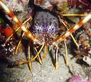 undervattens- färgrik livstid arkivfoto
