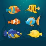 Undervattens- färgrika exotiska fiskar Royaltyfri Bild