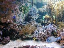 Undervattens- färgrika koraller royaltyfri fotografi