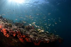 undervattens- för rev för korallfiskliggande tropiskt arkivbilder