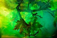 Undervattens- förorening med färgkemimaterial Royaltyfri Bild
