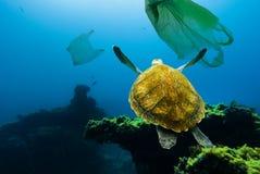 Undervattens- förorening Undervattens- sköldpadda som svävar bland plastpåsar arkivbild