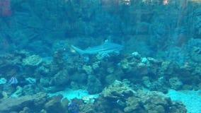 Undervattens- fisksimning arkivfilmer
