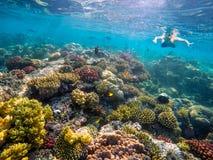 Undervattens- fors av en ung pojke som snorklar i Röda havet Fotografering för Bildbyråer
