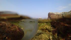 Undervattens- foto av en manet på Blacket Sea arkivbild