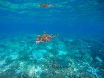 Undervattens- foto av havssköldpaddan i den blåa tropiska lagun Royaltyfria Bilder