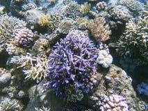 Undervattens- foto för tropiskt kustlandskap Djur för korallrev Fotografering för Bildbyråer