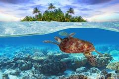 undervattens- grön sköldpadda arkivfoton